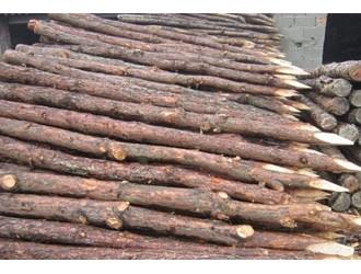 关于桩的趣闻与轶事 丛谈之11 中国古建筑的基础——松木桩